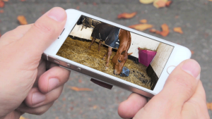 horse in smartphone via FarmCam IP